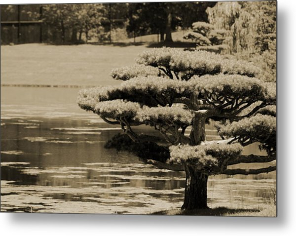 Bonsai Tree Near Pond In Sepia Metal Print