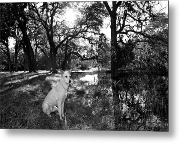Boo Ranch Dog Metal Print by Jimmy Bruch