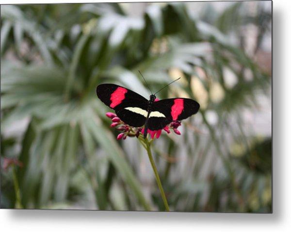 Borboleta Butterfly Metal Print