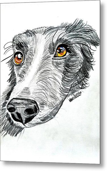 Border Collie Dog Colored Pencil Metal Print
