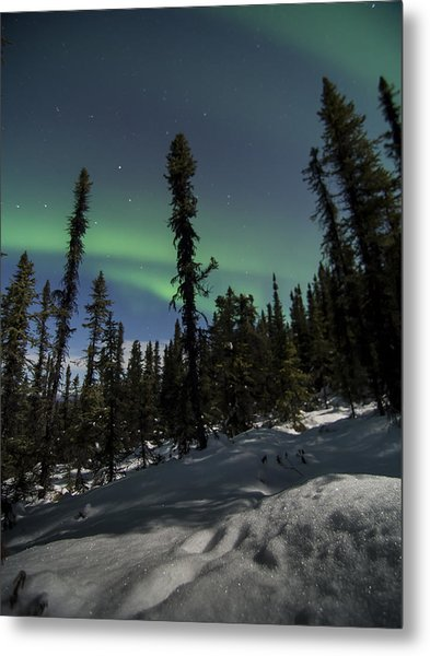 Boreal Forest Essence Metal Print