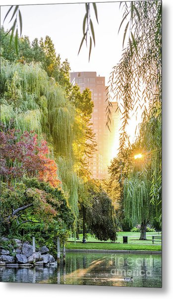 Boston Public Garden Sunrise Metal Print