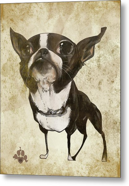 Boston Terrier - Antique Metal Print