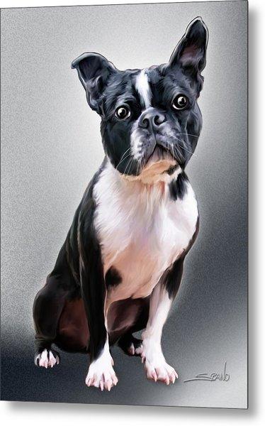 Boston Terrier By Spano Metal Print