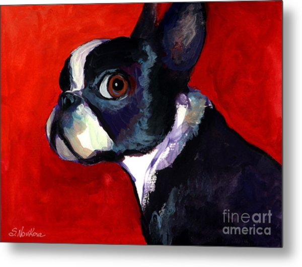 Boston Terrier Dog Portrait 2 Metal Print
