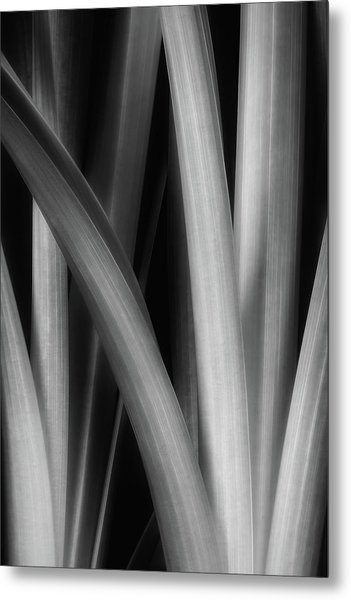 Botanical Abstract I Metal Print