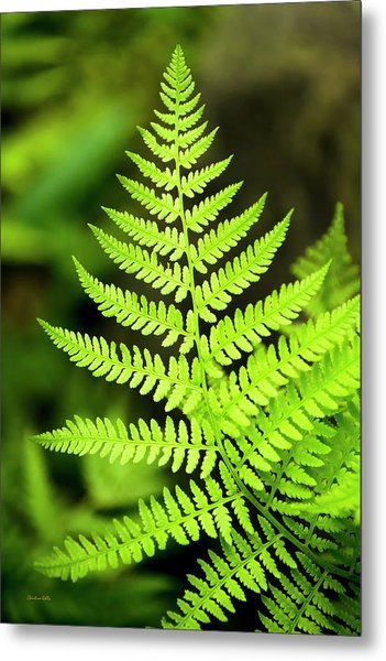 Botanical Fern Metal Print