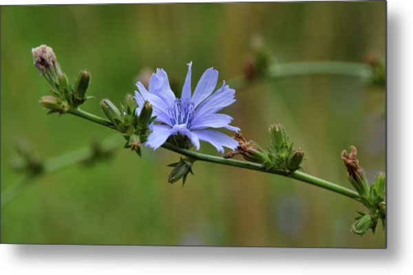 Botany Blues Metal Print by JAMART Photography