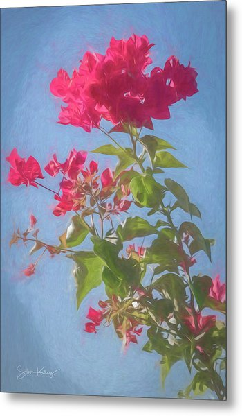 Bougainvillea Morning Metal Print