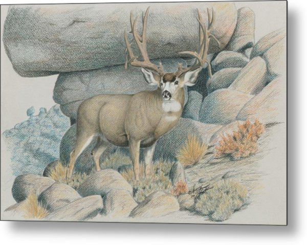 Boulder Buck  Metal Print
