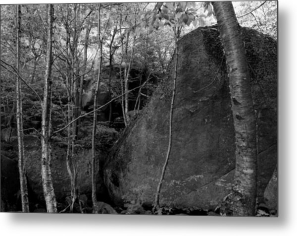 Boulders And Yellow Birch Metal Print