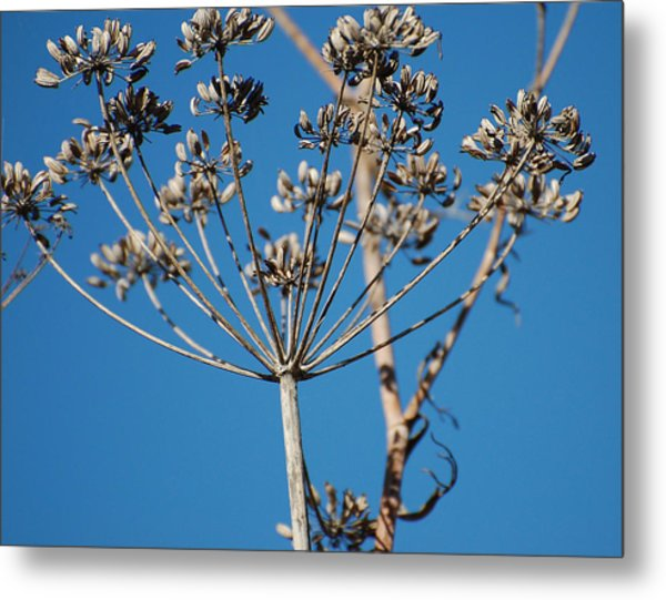 Bouquets Of Seeds Metal Print by Jean Booth