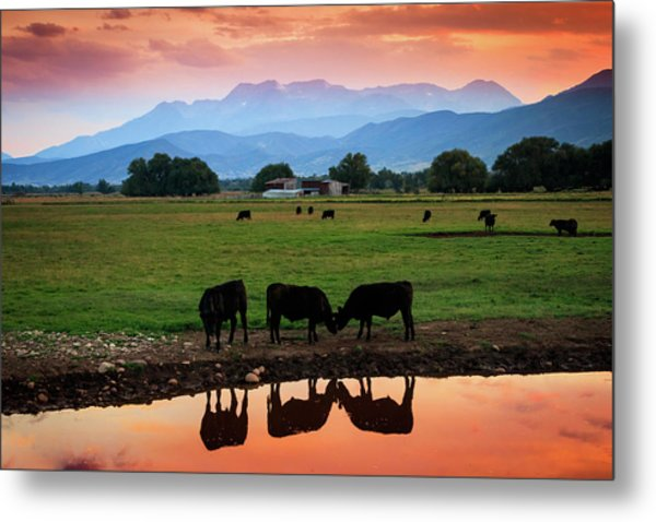 Bovine Sunset Metal Print by Johnny Adolphson