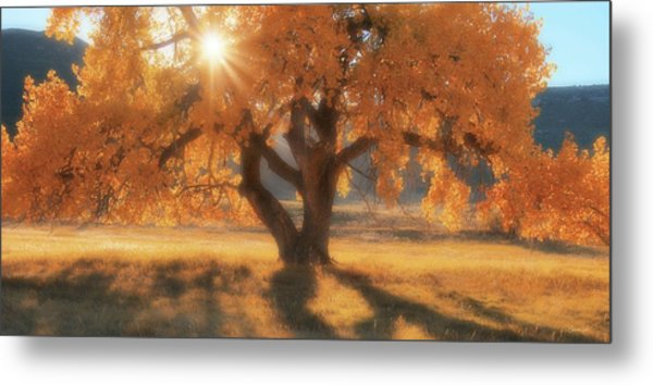 Boxelder's Autumn Tree Metal Print