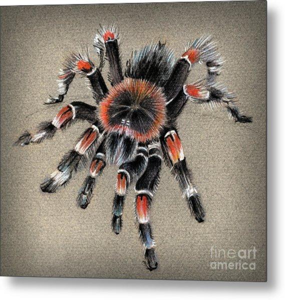 Brachypelma Smithi  Mexican Red Knee Tarantula Metal Print