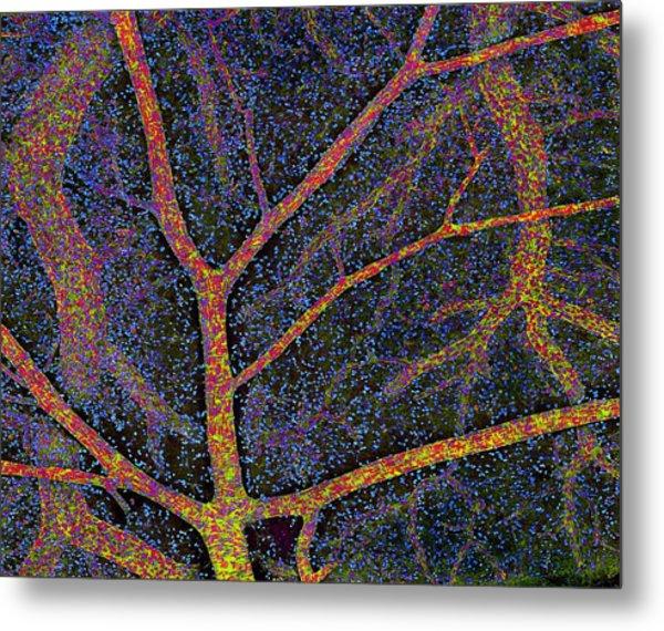 Brain Tissue Blood Supply Metal Print by Thomas Deerinck, Ncmir