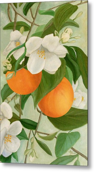 Branch Of Orange Tree In Bloom Metal Print