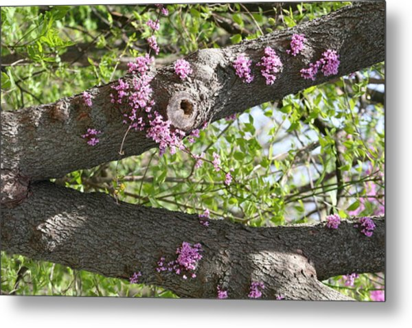 Branches Of Color Metal Print by Eric Irion