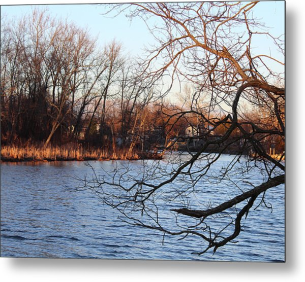 Branches Over Water Metal Print