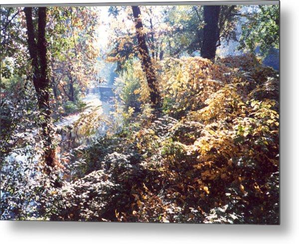 Brandywine Foliage Metal Print