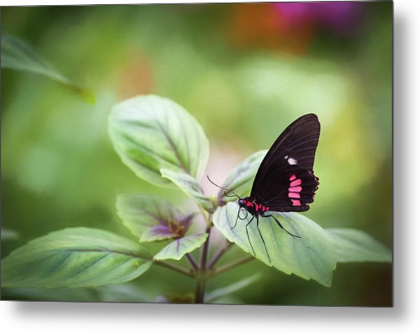 Metal Print featuring the photograph Brave Butterfly  by Cindy Lark Hartman