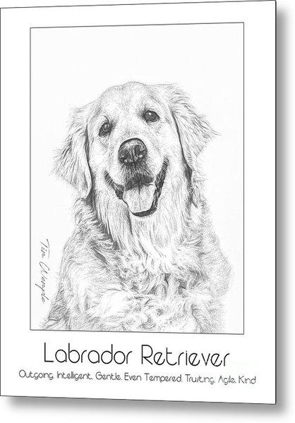 Breed Poster Labrador Retriever Metal Print by Tim Wemple