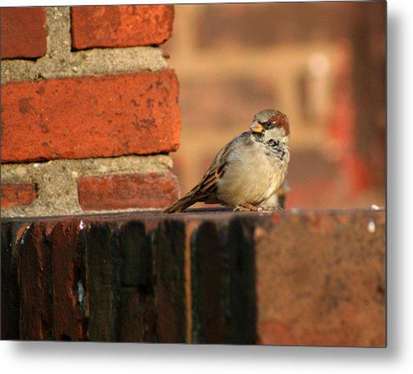 Brick And Bird Metal Print by Jason Hochman