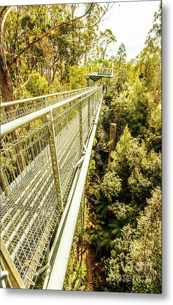 Bridging Forests  Metal Print
