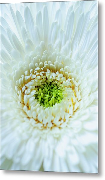 Metal Print featuring the photograph Bright As A Lime by Christi Kraft