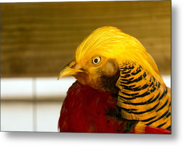 Bright Bird Metal Print