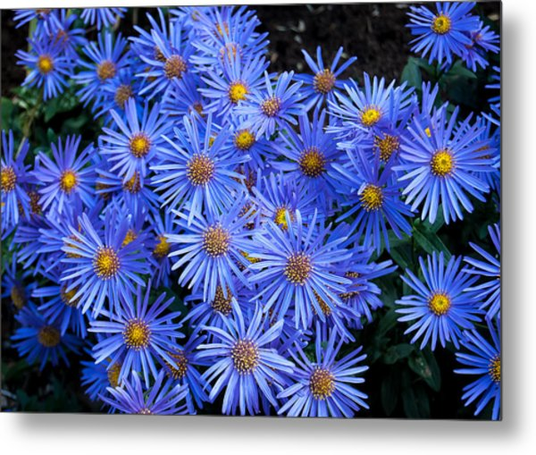 Bright Blue Metal Print