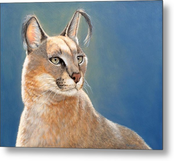 Bright Eyes - Caracal Metal Print