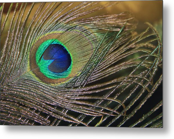 Bright Feather Metal Print