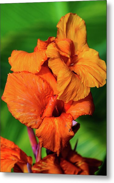 Bright Orange  Metal Print