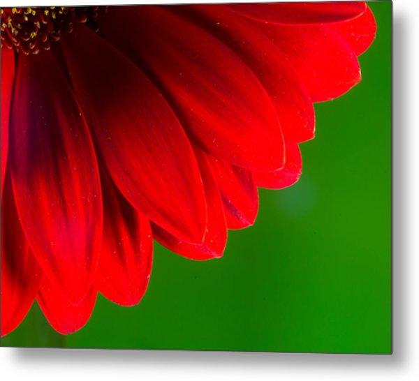 Bright Red Chrysanthemum Flower Petals And Stamen Metal Print