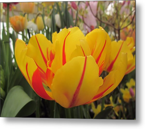 Bright Tulip Metal Print