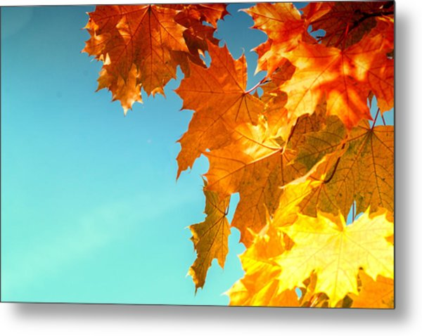The Lord Of Autumnal Change Metal Print