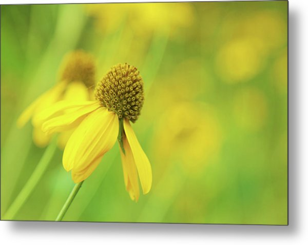 Bright Yellow Flower Metal Print