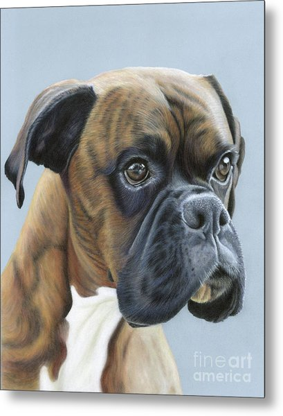 Metal Print featuring the painting Brindle Boxer Dog - Jack by Donna Mulley
