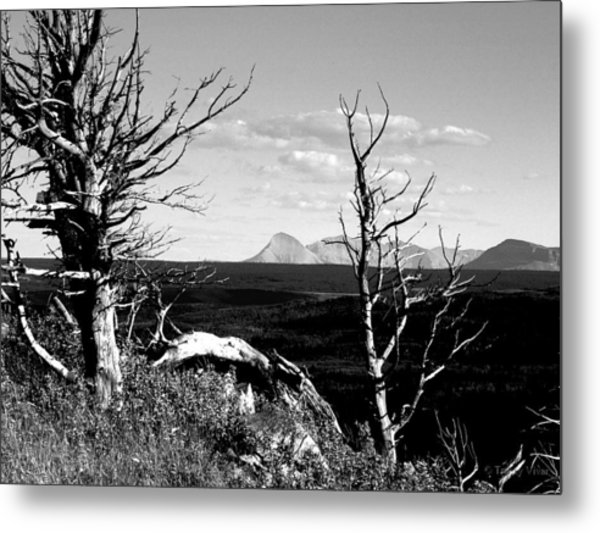 Bristle Cone Pines With Divide Mountain In Black And White Metal Print