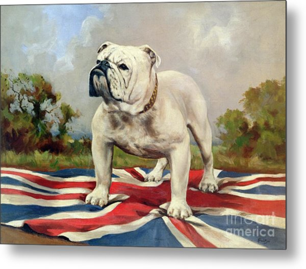 British Bulldog Metal Print