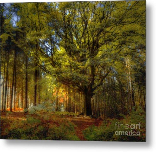 Broceliande Forest Metal Print