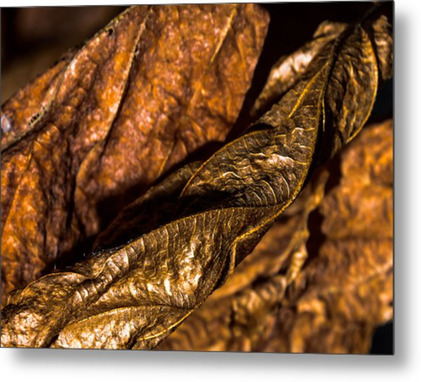 Bronze Leaves Metal Print