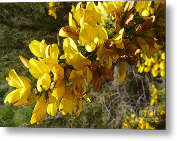 Broom In Bloom Metal Print
