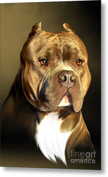 Brown And White Pit Bull By Spano Metal Print