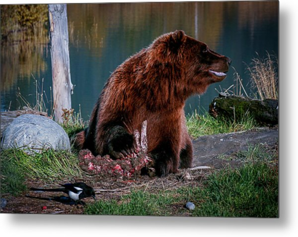 Brown Bear And Magpie Metal Print