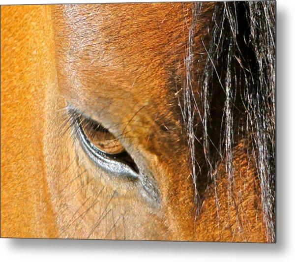Brown-eyed Wild Horse Metal Print by Liz Vernand