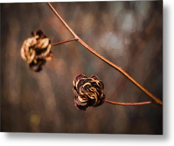 Brown Flower Seed Metal Print