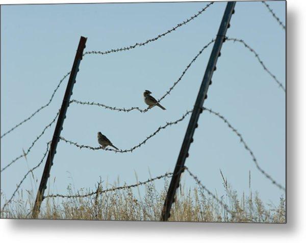 Brown-headed Cowbirds Sit On A Wire Metal Print