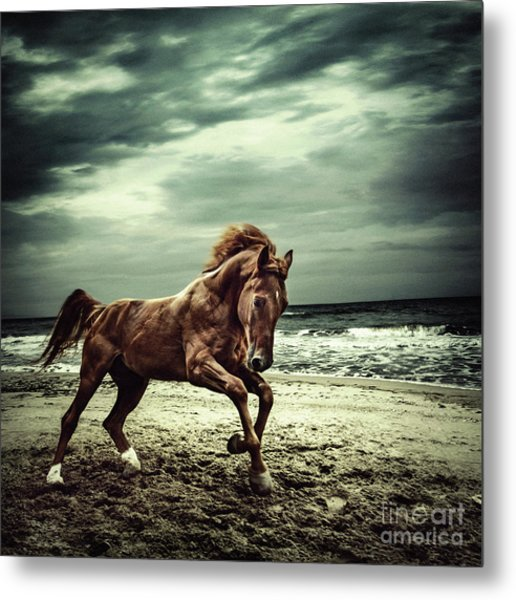 Brown Horse Galloping On The Coastline Metal Print
